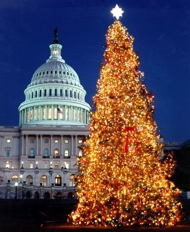 ... Christmas tree  at the US Capitol ...