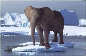 GOP_Elephant_on_an _iceberg