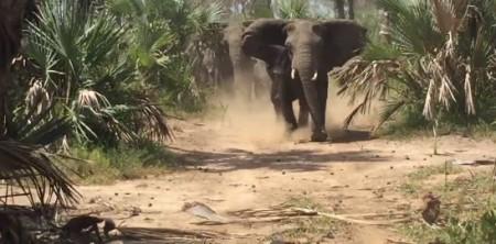 Elephants_charge_RINO-Flake